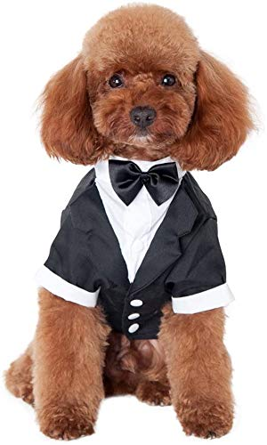 Kuoser Dog Shirt Puppy Pet Small Dog Clothes  Stylish Suit Bow Tie Costume  Wedding Shirt Formal Tuxedo with Black Tie  Dog Prince Wedding Bow Tie Suit S(Back:9.05  Chest:11.41   Neck:7.87 )