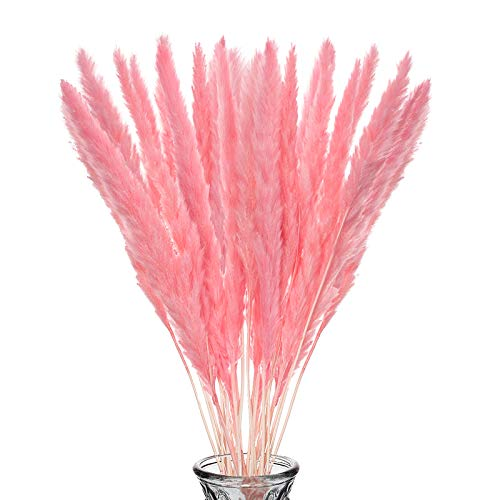 Wisolt 30 Piezas Hierba de Pampas Seca Natural Penacho de Hierba de caña Ramo de Flores secas Plantas Phragmites para arreglos de Boda y decoración del hogar (Rosa)