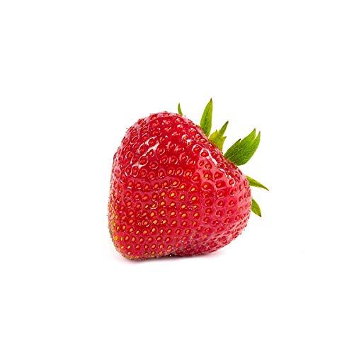 20 Elsanta Erdbeerpflanzen - Frigo Plus...