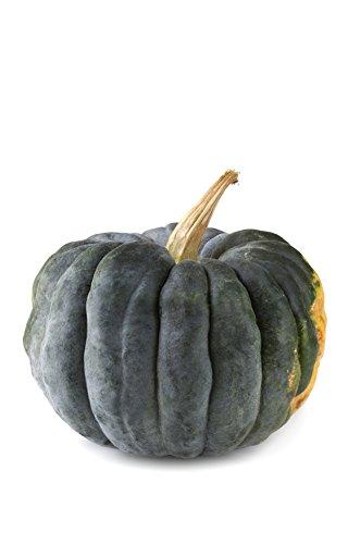 Seedeo® Kürbis Futsu Black (Cucurbita moschata) 10 Samen BIO