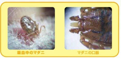 ハッピーペット薬用マダニ・ノミとりリンスインシャンプー犬猫用ポンプ700ml