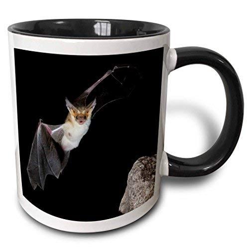 Queen54ferna Pallid Bat, Arizona-US03 Jmc0012-Joe und Mary Ann McDonald, zweifarbige Tasse, 325 ml, Schwarz/Weiß