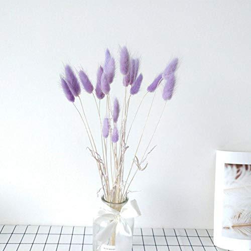 20 Stück natürliche getrocknete Blumen Lagurus weiße künstliche Blumen Bunte gefälschte Kaninchenschwanz Gras Ovatus Fuchsschwanz Bouquet Lange Trauben, lila