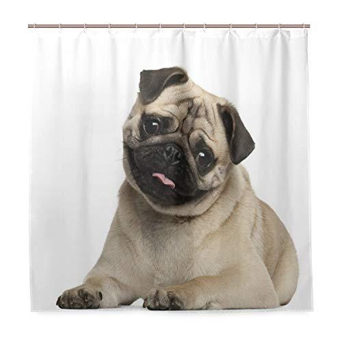 FOURFOOL Shower Curtain,Nine Months Old Pug Puppy Lying Around Cute Pet Funny Animal Domestication,Waterproof Bathroom Curtain,Modern Bath Curtain with 12 Hooks,72 x 72 Inch