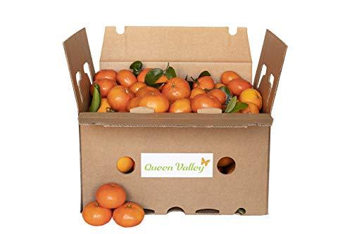 10 KG Mandarinas (calidad extra)