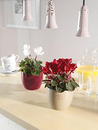Soendgen cerámica Flores Maceta, Basel Fashion, Arcilla, Cyclam, 16 x 16 x 15 cm