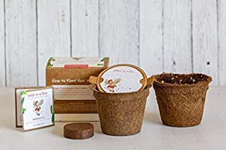 Wish in a Box- Plantable Seed Paper Gardening Gift - Planting Kit DIY