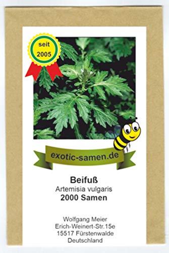 Beifuß - Bienenweide - Gewürzbeifuß - Artemisia vulgaris - 2000 Samen