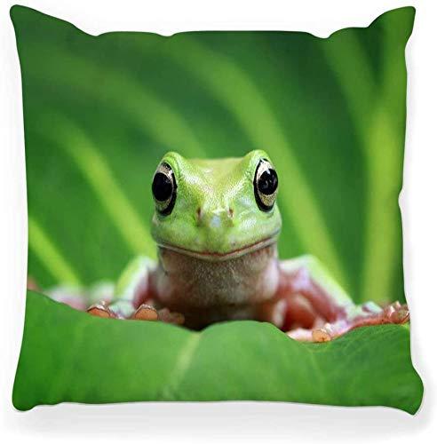 Funda de Almohada Decorativa Cuadrada 16x16 Tree Frog Dumpy Animal Wild Funny Cute Colorful Green Toad Adorable Amphibian Australia Branch Decoración para el hogar Funda de Almohada con Cremallera