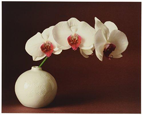 Nieuwe imagesapijten 24 x 30 cm orchideeën en vaas wit/orchids en witte vaas/orchidee en witte vaas