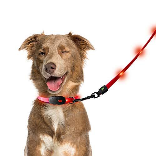 PETLESO 犬LEDリード 光る首輪 ライト付き USB充電 防水 中型犬 小型犬 レッド