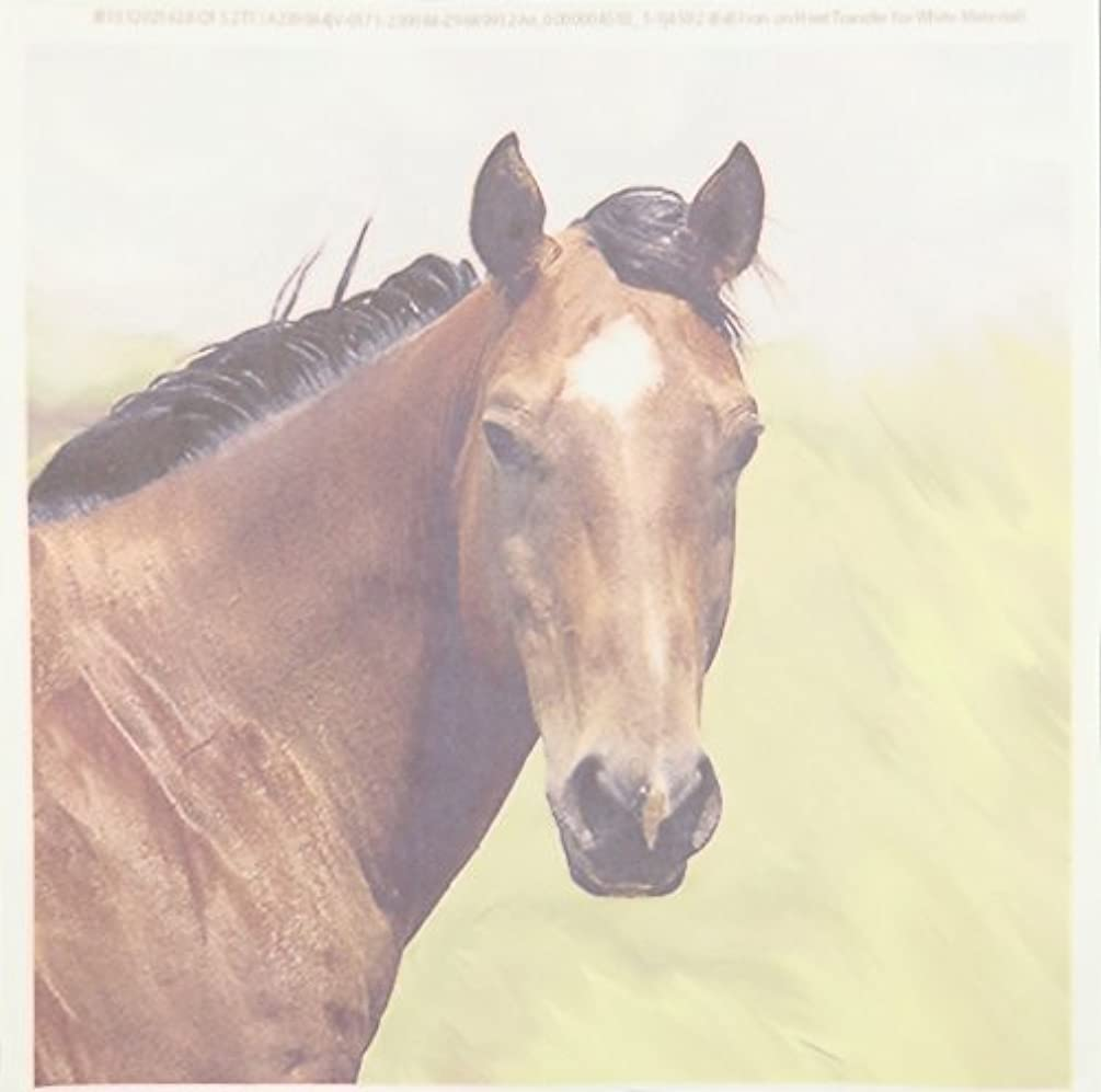 3dRose ht_4592_1 Paint Horse Portrait-Iron on Heat Transfer for White Material, 8 by 8-Inch