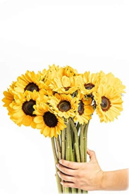 Greenchoice Flowers - Fresh Cut Sunflowers, Flowers for Delivery Prime, Birthday Flowers , Sunflower Bouquet (30 Stems) by Greenchoice Flowers