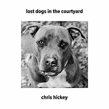 Lost Dogs in the Courtyard