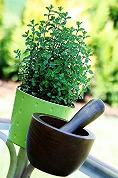 Shop Meeko Casa Giardino - origano - per la coltivazione indoor e balcone - semi