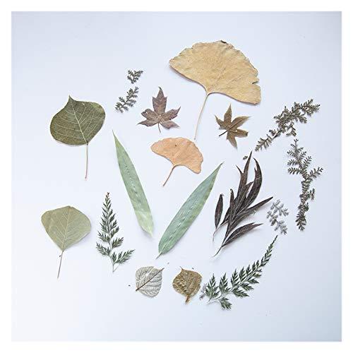 RJJX Hoja de otoño Bolso en Relieve DIY Aromatherapy Tarjeta de Cera Planta Casa en Relieve Hogar Casa Haciendo Embellished Seco Flower Series Velas