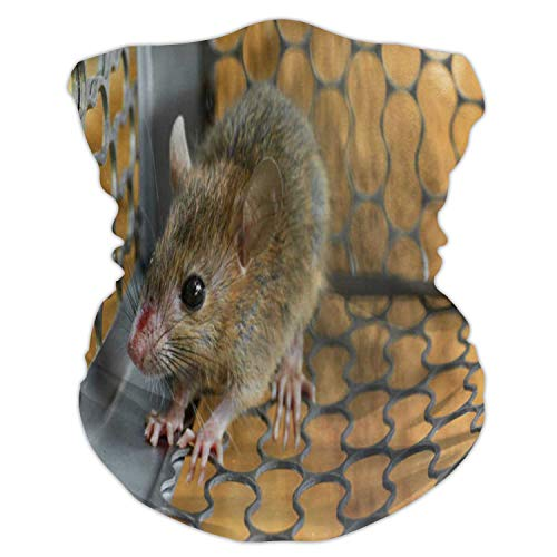 Mice trapped in a Trap cage.Inside of Rat Traps.Mouse - Animal,Face Scarf Outdoor Headwear ana Sports Tube UV Face M
