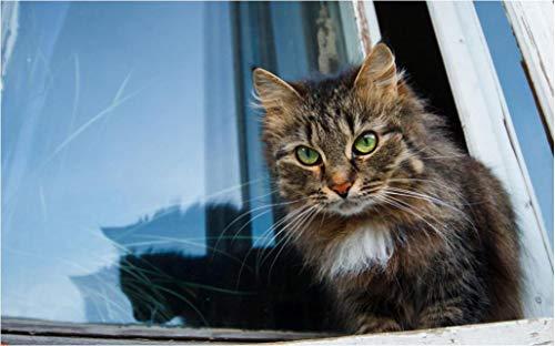 Kat op de vensterbank met cijfers Malt DIY uniek