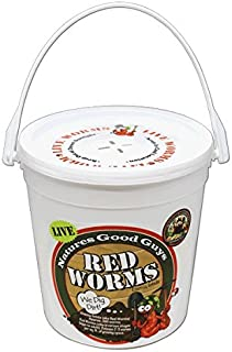 Red Worms 300 Red Wigglers are Great for Organic Gardening and Composting