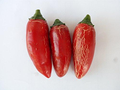 GRAINES DE PIMENT-jalapeno-thai dragon red