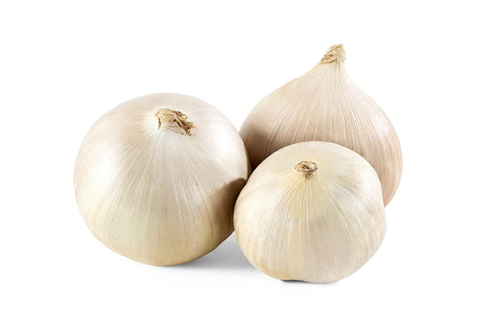 Elephant Garlic Rounds Ajo Macho Great shipfree Fall Planting In a popularity for L 1