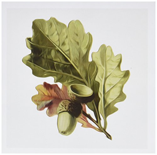 3dRose Vintage Oak Leaves And Acorns Digital Nature Oil Painting - Greeting Cards, 6 x 6 inches, set of 12 (gc_104653_2)