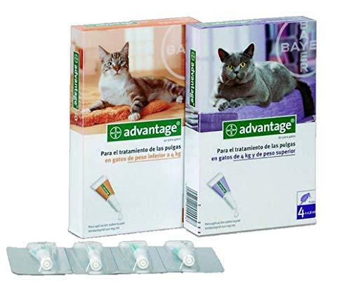 Pipette Anti-Puces Advantage pour Chats Chats de plus de 4kg