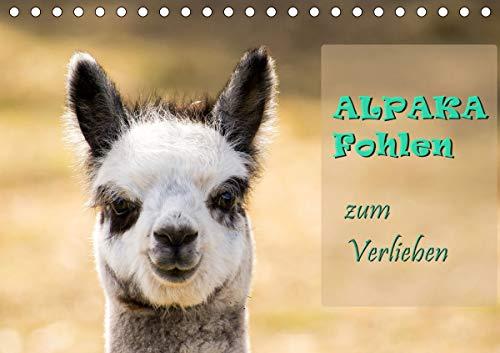 Alpaka Fohlen zum Verlieben (Tischkalender 2021 DIN A5 quer)