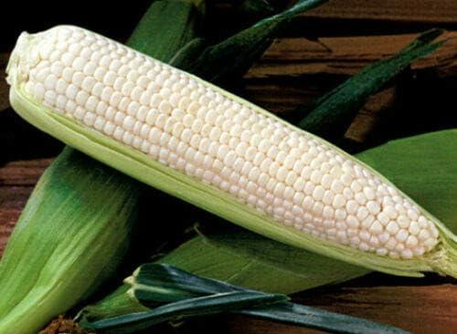 White Corn , Silver Queen, Hybrid Corn , Sweet rs2a1c (50 ct)