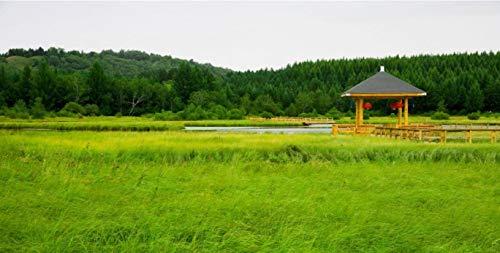 NoNo DIY Digitale Ölgemälde Tierlandschaft Architektur Ölgemälde Familie Interaktive Anhänger Farbmalereikleiner Pavillon Im Grünen Grasland Von Ulan Mutong