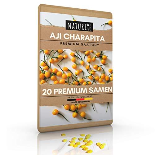 Aji Charapita Chili, 20 Samen der teuersten Chili der Welt, Premium Chilisamen