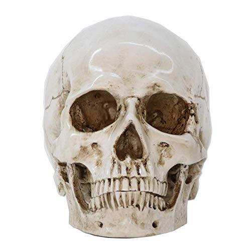Rhelf Adornos de escritorio de cráneo humano personalizado y artesanías clásicas Réplica de calavera Skull Halloween Skull Skeleton Head Realista Resina Skull Mantel gótico Decoraciones de Halloween A