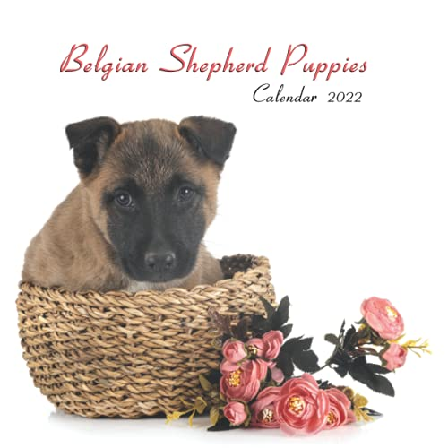Belgian Shepherd Puppies: Wall And Office Organize 2022, Mini Calendar Size 8.5' x 17' When Open | UK and US Official Holidays | A Must Have For Belgian Shepherd Lovers.