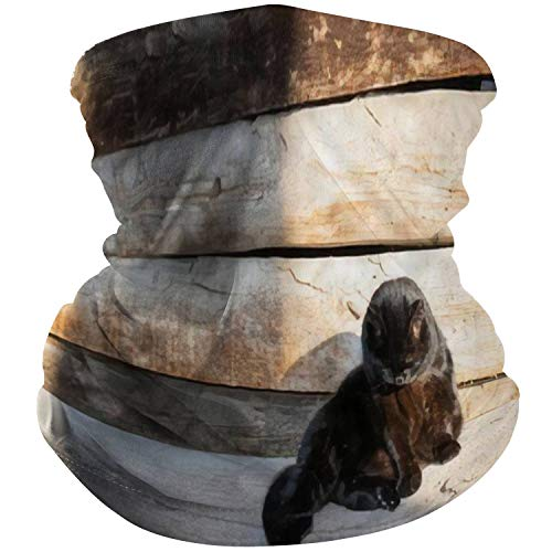 AndrewWMorton Face Scarf Neck Gaiter Cover Outdoor Tube Sun UV Face Mask Bandanas Black cat Laying in Sun Near Wooden Village House Wall Magic Headscarf for Sport Running Motorcycling Fishing Riding