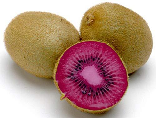 Kiwi Seeds - PINK Lady - Große Zimmerpflanze - Rare Tropische Früchte - 50 Samen