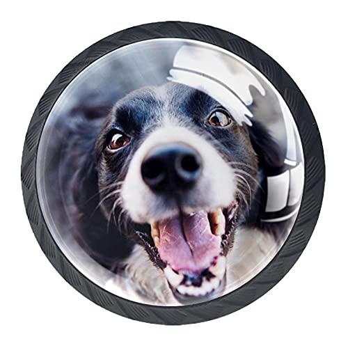 Animal Canine, pomos de cajón para puerta de gabinete (4 unidades) Sólido para oficina, hogar, cocina, cuarto de baño pomos para aparador, cajones y gabinetes