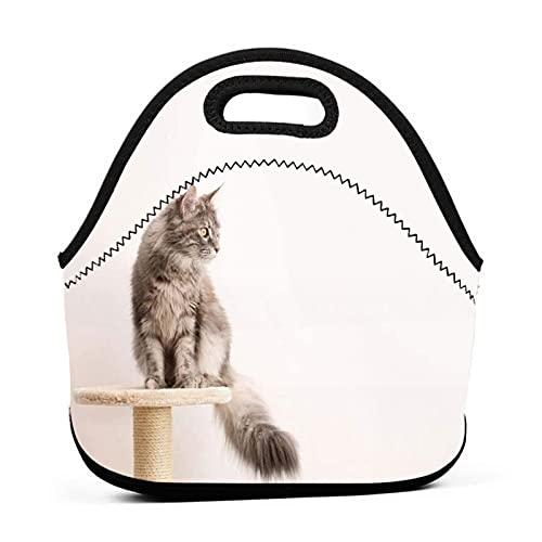 ADONINELP Sac à lunch fourre-tout portable,pochette à bento,joli chaton chat Maine Coon,néoprène avec emballage à fermeture éclair pour sac à main de voyage de bureau de travail scolaire