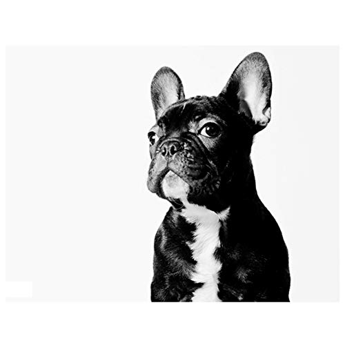 Aphila 5D Diamond Painting Kits for Adults and Beginner Full Drill Round Resin Rhinestone Embroidery Diamond Cross Stitch Arts Craft Supply Home Wall Decor Gift 10x12inches,French Bulldog