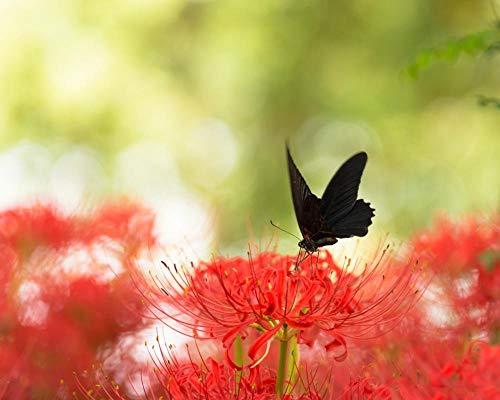 Lsping Puzzle Ostern 500 Teile schwarzer Schwalbenschwanzschmetterling und rote Spinnenlilie