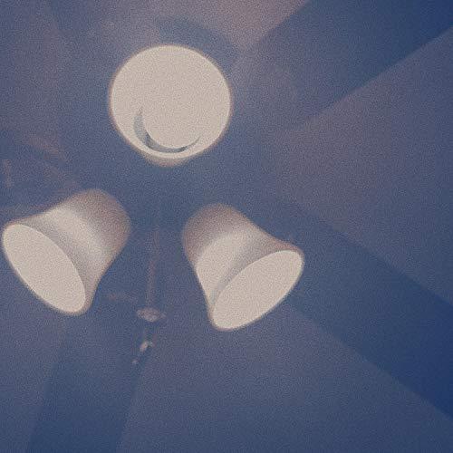my best friend is a moth who died (in my ceiling fan light)