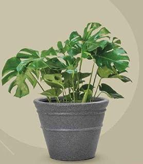 """Supremo ECO Planter Model L-48"""" x W-48"""" x H-36"""" 3121-XL"""