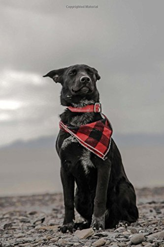 Adorable Black Dog Wearing a Plaid Scarf Strikes a Pose Journal: 150 Page Lined Notebook/Diary