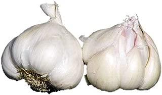 3+ ounces Early Italian Purple Garlic Bulbs