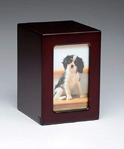 which is the best pet urns in the world