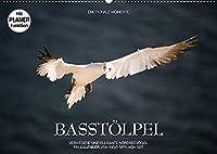 Emotionale Momente: Basstoelpel (Wandkalender 2022 DIN A2 quer): Elegante und verwegene Nordseevoegel. (Geburtstagskalender, 14 Seiten )