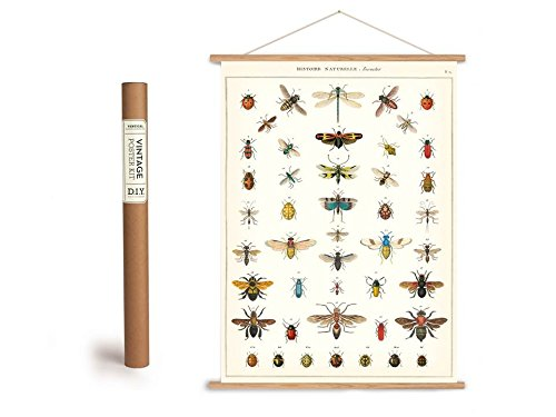 Cavallini Vintage Poster Set mit Holzleisten (Rahmen) und Schnur zum Aufhängen, Motiv Insekten