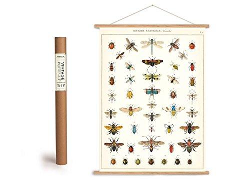 Vintage Poster Set mit Holzleisten (Rahmen) und Schnur zum Aufhängen, Motiv Insekten
