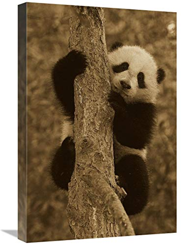 Global Gallery Cachorro Panda Gigante en árbol, Nativo de China – Arte...