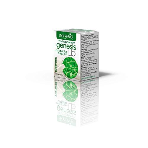 Bakterienkultur Lactobacillus bulgaricus 14 KAPSELN 240 Mg – Nahrungsergänzungsmittel