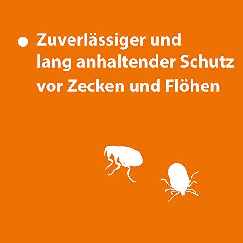 Quiko 077360 Ardap Spot on  Zecken und Flohschutz für große Katzen, 4 – 8 kg - 3